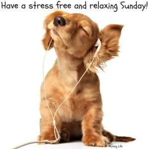 153324-Stress-Free-Sunday[1]
